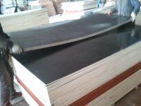 poplar wood commercial plywood