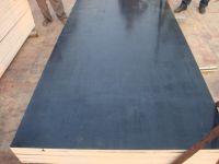 Film faced plywood of wbp glue