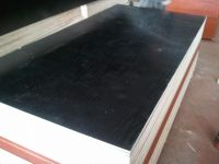 Pine wood film faced plywood