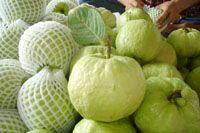 Fresh Guava & Rose Apple