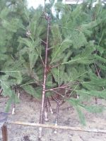 Artificial Pine Tree Branches