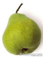 2013 New Season Yang Pear