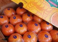 Fresh Noval Orange