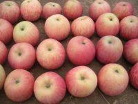 fresh fuji apple from Shaanxi China