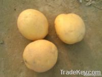FRESH POTATO, leading potato exporter from Bangladesh