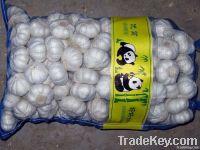 2011 China fresh garlic