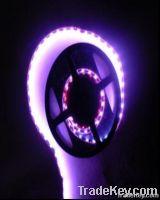 11.52W/M Strip Light (HZ-DT5050-48Y)