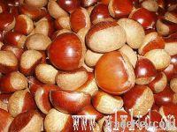 Fresh Chinese Chestnuts