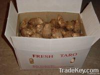 Fresh Taro