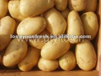 harvest potatoes