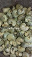 Cote D'Ivoire Origin Raw Cashew Nuts 2019 New Crop