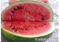 Egyptian Fresh Water Melons