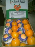 Fresh Navel Oranges by Fruit Link