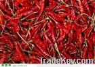 chilli, pepper