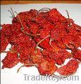 World hottest Bhut jolokia or ghost chilli