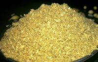 Coriander Seed Powder