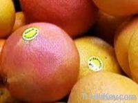 Citrous Fruits: Mandarine, Grapes, Orange, Pomelos , P