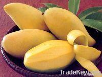 Hoa Loc Mango