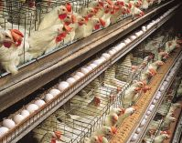 Wire Mesh Cages for Chicken and Pigeons