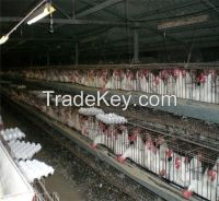 Automatic Control Tiler-Type Poultry Chicken Cage