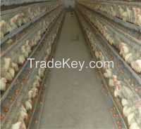 High quality types of layer chicken cages for zimbabwe poultry farms