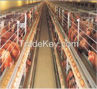 professional design Nigeria agricultural equipment a type chicken cage