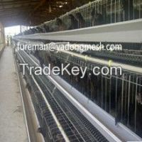Layer Chicken Battery Cages for Sale