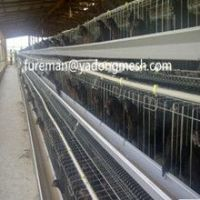 cheap battery chicken cage