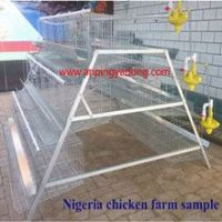 Popular A-Type Chicken Layer Battery Cage