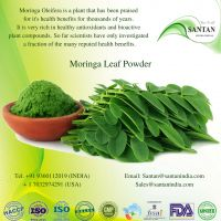 Morninga Leaf Powder