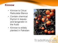 Citrus Fruit Fresh Mandarin (Kinnow)