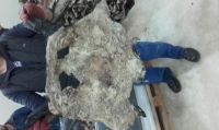 Wet salted cow head skin Europe origin