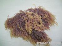 Eucheuma spinosum, cottonii, dried seaweeds