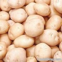 Fresh Potato (Fresh Vegetables)