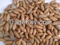raphia hookeri seeds