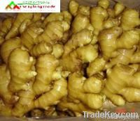 2011 best quality fresh ginger
