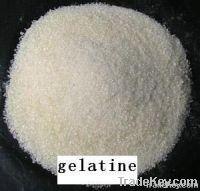 Gelatine 100%
