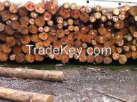 Yellow pine logs