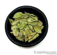 Dehydrated Boldo Leaves