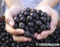 ABC Acai Berry Hot Sale Diet Slimming Capsule