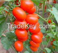 Natural Tomato Plant Weight Loss Capsules