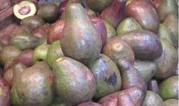 Avocado, Mango, Pineaple