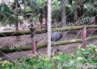 rope mesh, hand woven mesh, aviary mesh, zoo bird netting