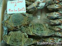 Cambodian Seasfood