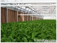 Greenhouse Pads or Greenhouse Cooling Pads