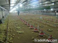 Chicken Drinker, Drinkers, Animal Husbandry, Poultry