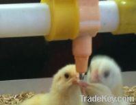 poultry nipple drinker