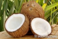 Fresh Mactured Coconuts