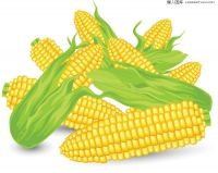 Yellow Corn / Maize / Agriculture Grains