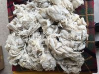 Raw Wool / Animal Hair